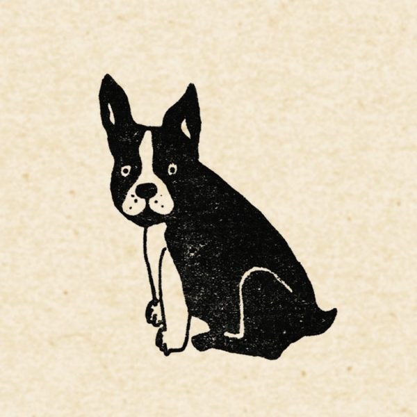 Close up of black frenchie on flecked cream paper
