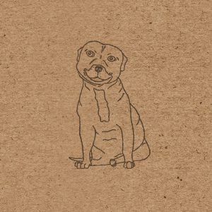 Close up of Stevie the Staffie on brown kraft background